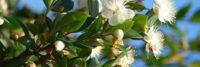 wisdom of the earth essential oils